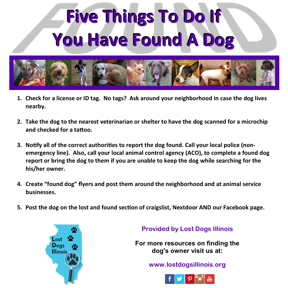 All of craigslist by state - 5 Things To Do If You Have Found A Dog