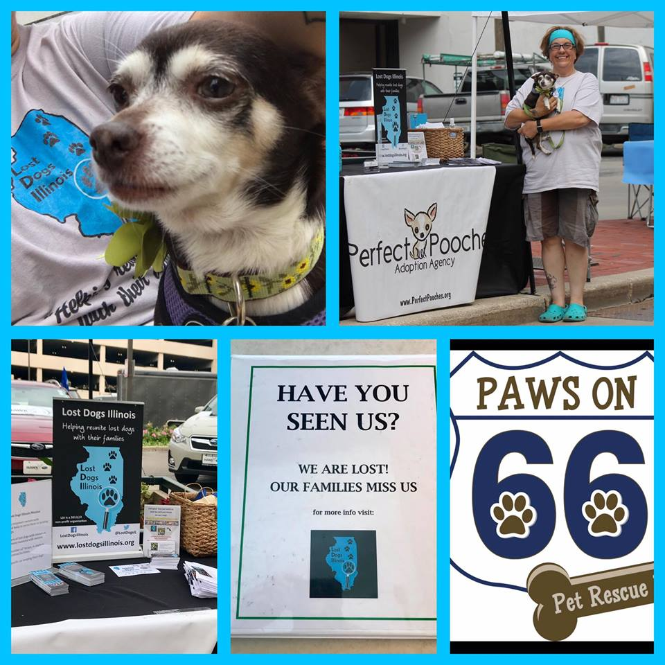 Please Continue To Support Lost Dogs Illinois And Their Mission By Making A  Taxdeductible Donation