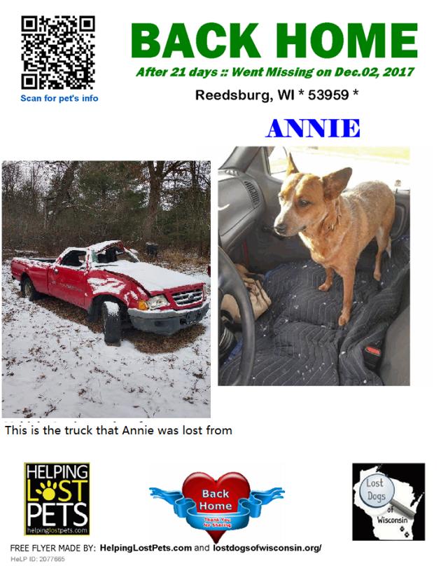 0319bd30c6b Shy Lost Dog Strategies | Lost Dogs Illinois
