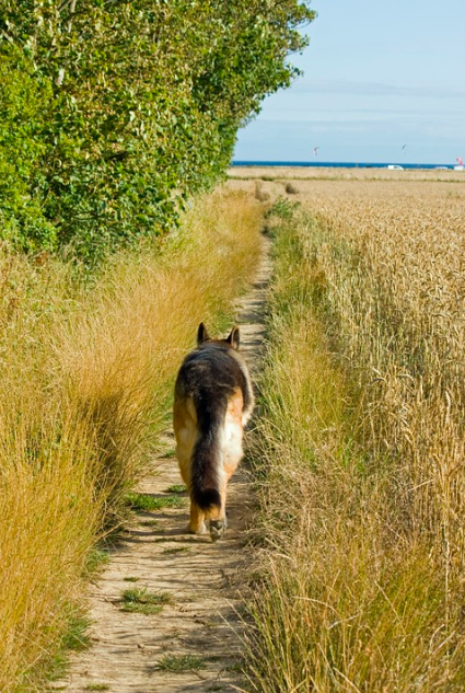 2ecc041f121 Dogs lost in rural areas can pose extra challenges because of the sparse  population. It is not unusual for sightings to be few and far between or for  there ...